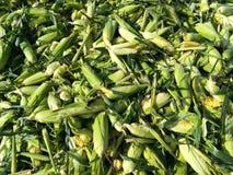 Toneladas de mazorca de maíz foto de archivo