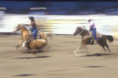 Tonen de team roping gebeurtenis, de Oude Spaanse Dagen, de Fiestarodeo en het Voorraadpaard, Graaf Warren Showgrounds, Santa Bar royalty-vrije stock afbeelding