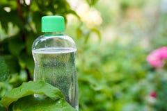 Toner o olio naturale su fondo verde con lo spazio della copia cosmetico della medicina di dermatologia, modello immagini stock libere da diritti