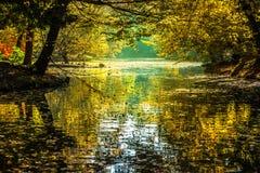 Tonerna av hösten Arkivfoton