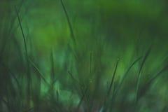 Tones of grass Royalty Free Stock Photos