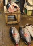 tonfisk royaltyfri fotografi
