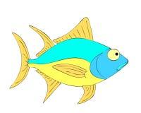 tonfisk Arkivbild