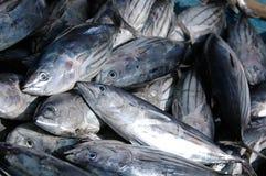 tonfisk royaltyfri foto