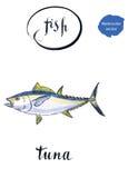 Tonfisk för havsfisk Fotografering för Bildbyråer