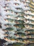 Tonfiskfisk med is på marknad Royaltyfri Bild