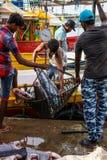 Tonfiskfisk som kommer med till land från fartyg i den Mirissa hamnen, Sri Lanka Royaltyfri Fotografi