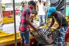 Tonfiskfisk som kommer med till land från fartyg i den Mirissa hamnen, Sri Lanka Arkivbild