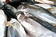 tonfiskyellowfin Arkivfoton