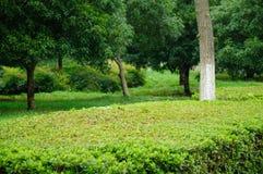 Tong Jing Park Foto de archivo libre de regalías