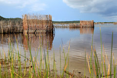 Tonga fish traps. Fish traps build by the Tonga people from Kosi Bay, South Africa. Fish are trapped and then speared Royalty Free Stock Image