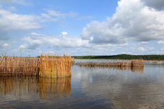 Tonga fish traps. Fish traps build by the Tonga people from Kosi Bay, South Africa. Fish are trapped and then speared Royalty Free Stock Photo