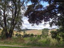 Tongariro River Scene in New Zealand Royalty Free Stock Images