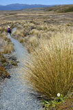 Tongariro trail in New Zealand. Stock Photos