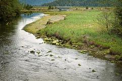 Tongass国家森林, Sitka阿拉斯加 图库摄影