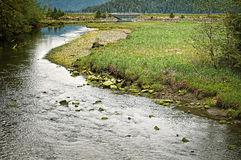Tongass staatlicher Wald, Sitka Alaska Stockfotografie
