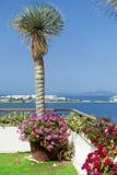 Tongefäß mit blühenden Blumen der Pelargonie auf einer Terrasse mit Seeansicht Stockbilder