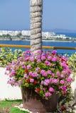 Tongefäß mit blühenden Blumen der Pelargonie auf einer Terrasse mit Seeansicht Lizenzfreies Stockfoto