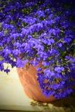 Tongefäß mit hellen blauen Blumen Stockbilder