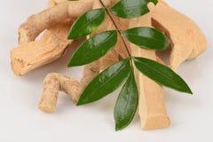 Tongkat Ali liście (Eurycoma longifolia dźwigarka) zdjęcia stock