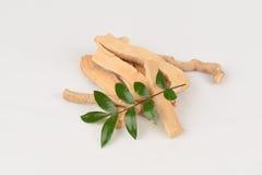 Tongkat Ali liście (Eurycoma longifolia dźwigarka) obrazy stock