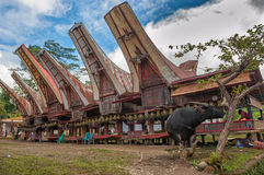 Tongkonan houses, Torajan buildings, Tana Toraja, Sulawesi Stock Images