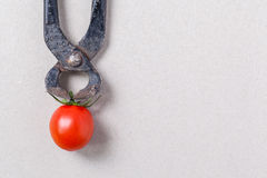 Tongs and cherry tomato Royalty Free Stock Images