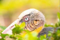 Tongtong stork Royaltyfria Bilder