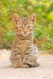 Tongue out. Curious little cat under warm summer light softened by filter stock images