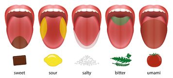 Tongue Taste Areas Sweet Sour Salty Bitter Umami. Tongue with five taste areas sweet, sour, salty, bitter and umami represented by chocolate, lemon, salt, herbs Stock Photography