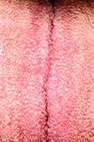 Tongue texture human body Royalty Free Stock Photography