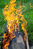 Tongues of flame on brazier. Flames of burning boards in outdoor brazier Royalty Free Stock Image