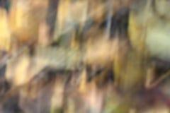 Toni di autunno Fotografia Stock Libera da Diritti