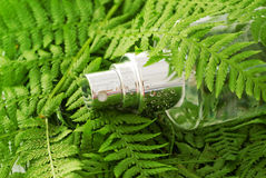 Tonic Water in  Fern Leaf Royalty Free Stock Photos