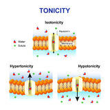 Tonicity and osmosis. Cell membrane and aquaporin. Effect of different solutions on cell. Isotonic, Hypotonic and Hypertonic Royalty Free Stock Photography