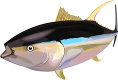 tonijn Royalty-vrije Stock Foto's