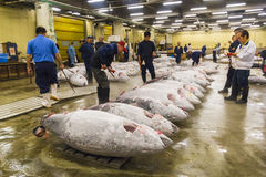 Tonijn voor veiling bij Tsukiji-vissenmarkt Stock Afbeelding