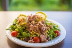 Tonijnvissen met groene salade en tomaten Stock Fotografie