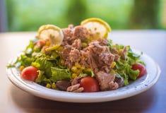 Tonijnvissen met groene salade en tomaten Stock Foto