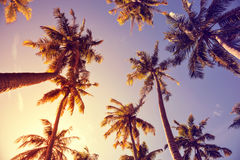 By toning vintage palm trees Royalty Free Stock Image