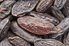 Tonka beans Stock Image