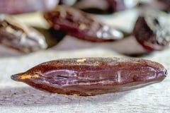 Tonka beans Stock Photography