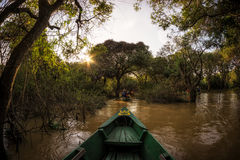 Tonle Sap Mangrove Forest Stock Photography