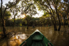 Tonle Sap Mangrove Forest Royalty Free Stock Photography