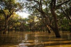 Tonle Sap Mangrove Forest Stock Photos