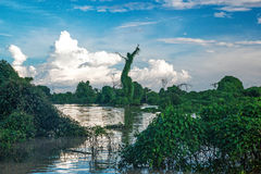 Tonle Sap Mangrove forest scenery near Siem Reap. Tonle Sap Mangrove forest scenery Siem Reap Royalty Free Stock Image