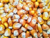 Tonnellate di semi del cereale dentro le grandi borse Fotografie Stock