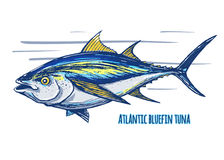 Tonno atlantico Fotografie Stock