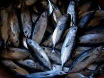 Tonno giovanile fresco dai pescatori filippini artigianali Fotografia Stock
