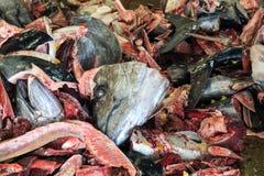 Tonno su un mucchio come frequente scena nei mercati ittici Fotografia Stock